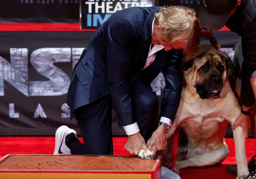 Director Bay places the paw of his dog Rebel in cement during a ceremony in the forecourt of the TCL Chinese theatre in Los Angeles