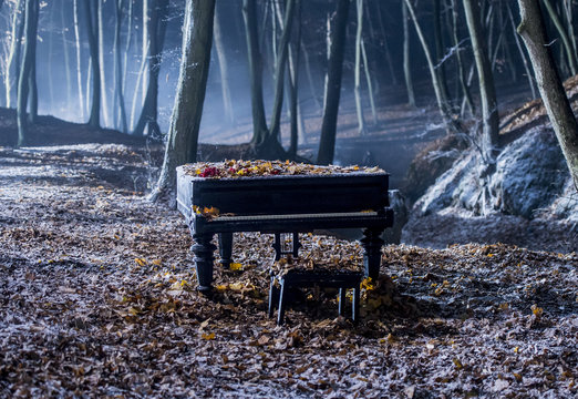 Grand piano in the woods