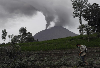 A villager sprays pesticide on a farm as Mount Sinabung spews ash in the background at Sukanalu village in Karo district