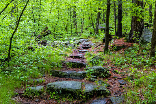 Rain Covered Forest Path