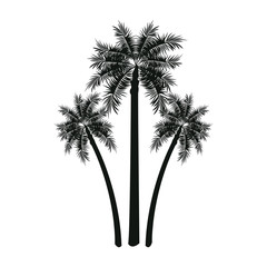 three palm tree tropical leaves trunk vector illustration