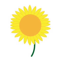 cute flower sunflower decoration nature vector illustration