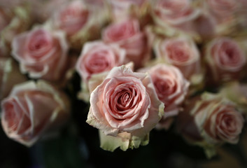Pink roses are pictured at a flower shop on the eve of St Valentine's Day in Frankfurt