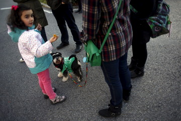 """A dog wearing a t-shirt that reads """"Public education for all"""" is pictured during a march on the first day of a three-day nationwide education strike to protest changes in the system for university degrees in central Madrid"""