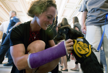 """Congressional aide Megan Mitchell pets a dog named 'Buttons' during an animal adoption event """"Paws for Celebration"""" on Capitol Hill in Washington"""