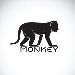 Vector of a monkey on white background. Wild Animal