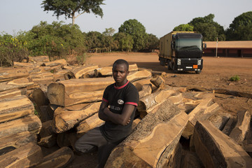 A driver from Guinea waiting to drive to Bissau stands amid cut rosewood in Sintchan Tcherno,