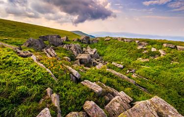 Dandelions among the rocks in Carpathian Alps