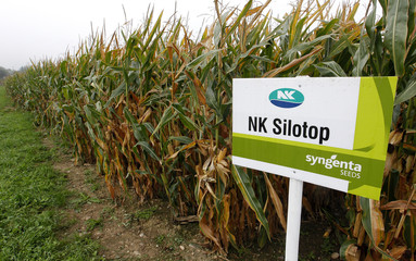 A sign shows the logo of Swiss agrochemicals maker Syngenta and its corn seeds type NK Silotop in front of a cornfield near the company's plant in Stein
