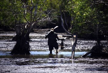 Australian Aboriginal hunter Robert Gaykamangu of the Yolngu people carries a Magpie Goose he successfully shot in a billabong near the 'out station' of Ngangalala, located on the outksirts of the community of Ramingining in East Arnhem Land