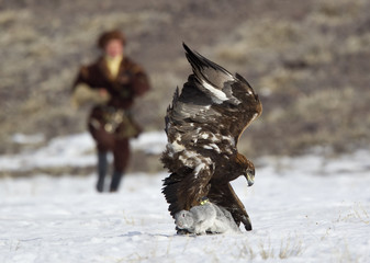 A Kazakh hunter runs towards to his tamed golden eagle after it catches a rabbit during an annual hunting competition in Chengelsy Gorge