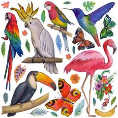 Tropical garden Birds, butterflies, parrots, flowers, fruits, palms Toucan Flamingo Сockatoo Hummingbird Hand drawn watercolor images, icons Tropical summer vacation