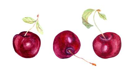 Cherry berries. Watercolor