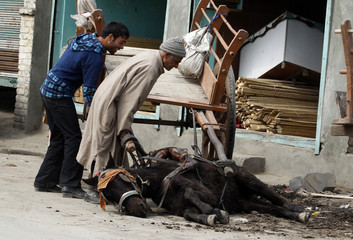 Kashmiri people help the horse to stand as it had fallen on a road side in Srinagar