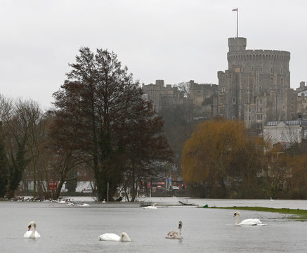 Windsor Castle is seen in the background as swans swim over a meadow flooded by the Thames River in Windsor