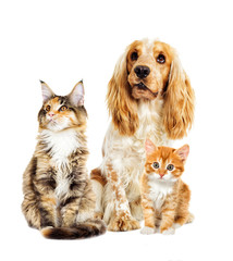 Wall Mural - dog and kitten on a white background