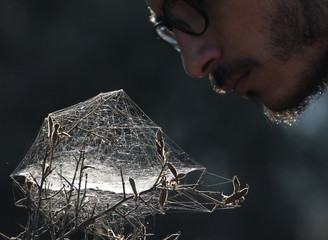 A scout inspects a spider web in Jezzin, south Lebanon