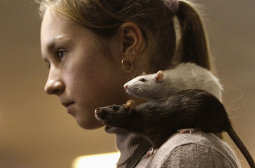 """A girl stands with rats on her shoulder during the international exhibition of rodents """"Autumn Footprints - 2013"""" in Minsk"""