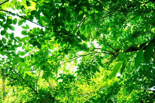 初夏の新緑と空