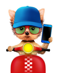 Adorable puppy with cellphone sitting on motorbike