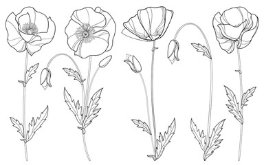 Vector set with outline Poppy flower, bud and leaves in black isolated on white background. Floral elements in contour style with poppy for summer design and coloring book. Symbol of Remembrance Day.