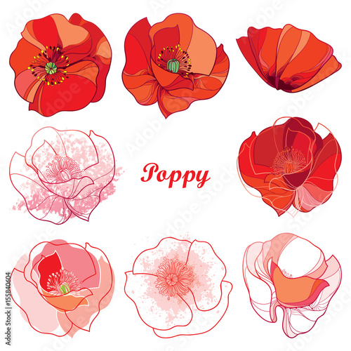 Vector Set With Outline Poppy Flower Ornate Flowers In Red White