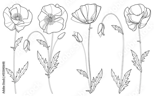 Vector set with outline poppy flower bud and leaves in black vector set with outline poppy flower bud and leaves in black isolated on white background mightylinksfo