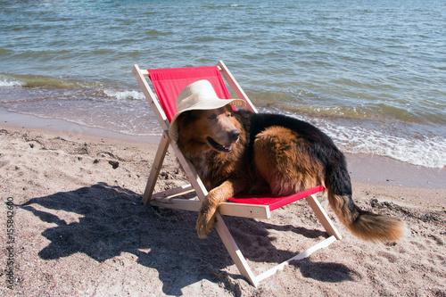hund mit hut im sommer liegt in einem liegestuhl am strand. Black Bedroom Furniture Sets. Home Design Ideas