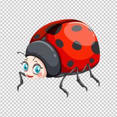 Cute ladybug on transparent background