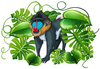 Baboon in green leaves
