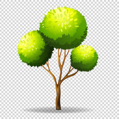 Gree tree on transparent background