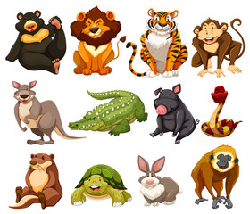 Different kinds of jungle animals