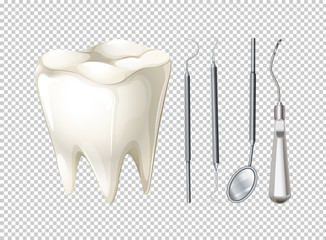 Tooth and dental equipments