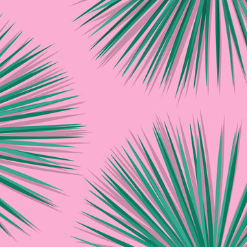 Tropical palm leaves. Botanical leaves on millenial pink background. Exotic background