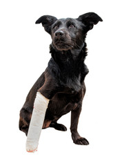 Black dog's leg is wrapped in a bandage.
