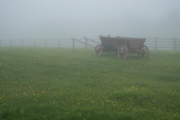 rustic wagon for horses standing on a green meadow in the mist