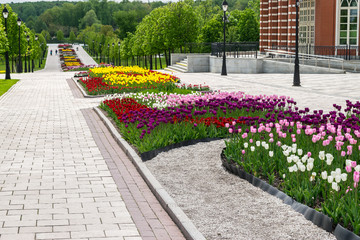The colorful flower-beds with white, pink, yellow, red and  violet tulips in Tsaritsino park and reserve in Moscow, Russia.