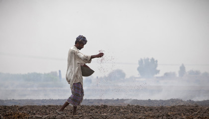 A man, displaced by heavy floods for almost a year, sprinkles seeds while working in the field in Ghauspur