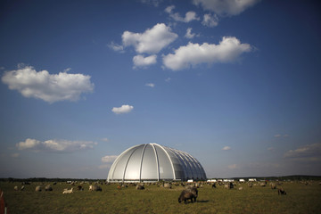 A flock of sheep is pictured in front of a Tropical Islands holiday resort near the eastern German village of Brand