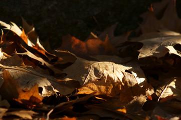 Blatt im Herbst dig_0333