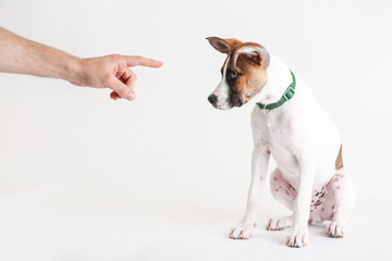 Man's hand points to dog to be obedient
