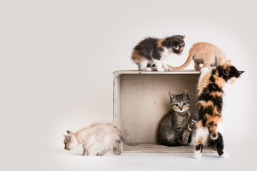 Litter of colorful kittens play in and around a wooden crate