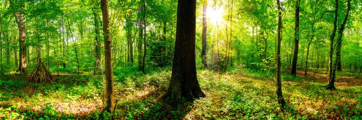 Fototapeten Wald Wald im Frühling, Panorama einer Landschaft mit Bäumen und Sonne