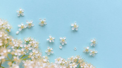 Spring flowers on a blue background