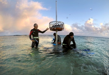 Peter Gash, owner and manager of the Lady Elliot Island Eco Resort, checks an equipment storing basket as he prepares to snorkel with Oliver Lanyon and Lewis Marshall at Lady Elliot Island