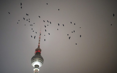 Birds fly past the television tower in Berlin