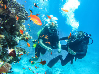 Canvas Prints Diving Дайверы под водой. Погружение с аквалангом