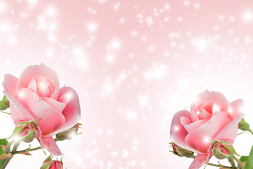 beautiful background for your text with rose flowers