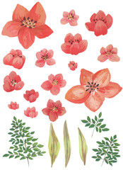 Watercolor painted collection. Excellent Design Watercolor Flowers and Leaves Elements for invitation