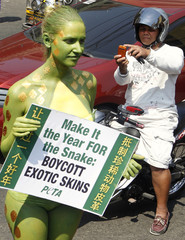 A motorist takes a picture of activist from PETA painted to look like a snake, holding a placard during PETA's awareness campaign on the cruelty behind animal skins at Chinatown in Manila